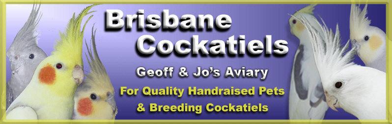 Cockatiels at Geoff & Jo's Aviary Pet cockatiels Brisbane